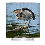 Green Heron Pictures 469 Shower Curtain