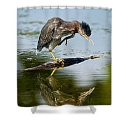 Green Heron Pictures 488 Shower Curtain