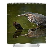 Green Heron Pictures 491 Shower Curtain