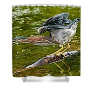 Green Heron Pictures 522 Shower Curtain