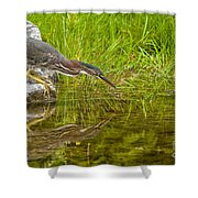 Green Heron Pictures 534 Shower Curtain