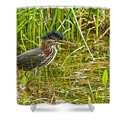 Green Heron Pictures 545 Shower Curtain