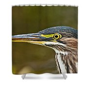 Green Heron Pictures 548 Shower Curtain