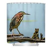 Green Heron Pose Shower Curtain