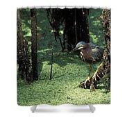 Green Heron Shower Curtain by Steven Ralser