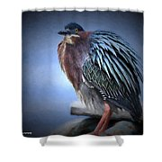 Green Heron Vignetted  Shower Curtain
