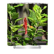 Green Hummingbird On Red Hibiscus Flower 2 Of 10 Shower Curtain