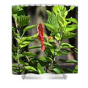 Green Hummingbird On Red Hibiscus Flower 5 Of 10 Shower Curtain