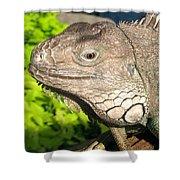 Green Iguana Face Shower Curtain