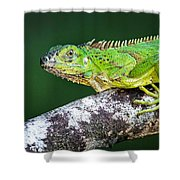 Green Iguana Iguana Iguana, Tarcoles Shower Curtain