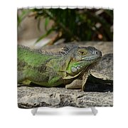 Green Iguana Lizard Shower Curtain