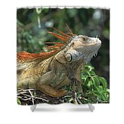 Green Iguana Male Portrait Central Shower Curtain