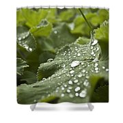 Green Leaf And  Fresh Water Pearl Shower Curtain