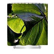 Green Leaf I Shower Curtain