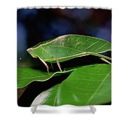 Green Leaf-mimic Katydid Steirodon Shower Curtain