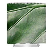 Green Leaf Up Close 2 Shower Curtain
