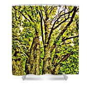 Green Leafy Trees Shower Curtain