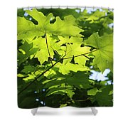 Green Leaves Canvas Shower Curtain