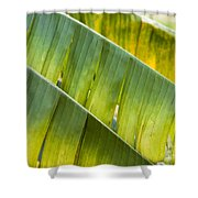Green Leaves Series 14 Shower Curtain