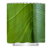 Green Leaves Series  6 Shower Curtain
