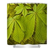 Green Leaves Series Shower Curtain by Heiko Koehrer-Wagner
