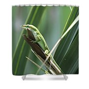 Green Lizard Shower Curtain