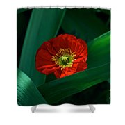Green Loves Red Loves Green Shower Curtain