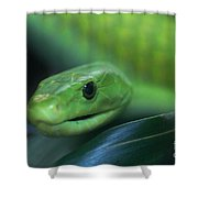 Green Mamba 2 Shower Curtain