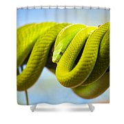 Green Mamba Coiled Up On A Branch Shower Curtain