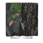 Green Mantis Shower Curtain