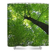 Green Maple Canopy Shower Curtain