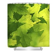 Green Maple Leaves Shower Curtain by Elena Elisseeva