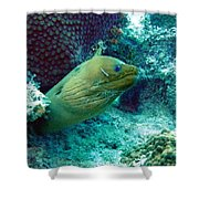 Green Moray Eel With Cleaning Fish Shower Curtain
