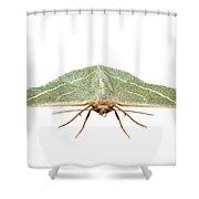 Green Moth Chlorissa Etruscaria Shower Curtain
