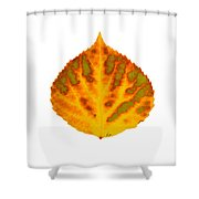 Green Orange Red And Yellow Aspen Leaf 1 Shower Curtain