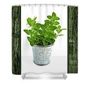 Green Oregano Herb In Small Pot Shower Curtain
