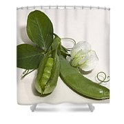 Green Peas In Pod With White Flower Shower Curtain
