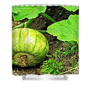 Green Pumpkin Shower Curtain