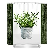 Green Rosemary Herb In Small Pot Shower Curtain