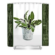 Green Sage Herb In Small Pot Shower Curtain by Elena Elisseeva