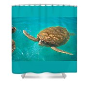 Green Sea Turtle Surfacing Shower Curtain