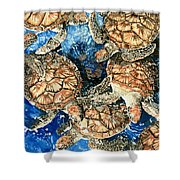 Green Sea Turtles Shower Curtain