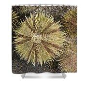 Green Sea Urchins Shower Curtain