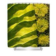 Green Silk 03 Shower Curtain