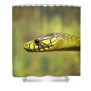 Green Snake. Shower Curtain