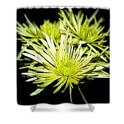 Green Spider Mums Shower Curtain