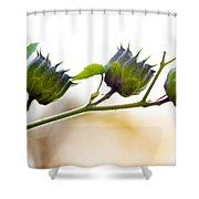 Green Spiky Wild Flowers Shower Curtain
