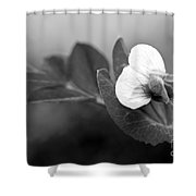 Green Sweet Pea Flower In Black And White Shower Curtain