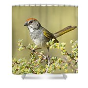 Green-tailed Towhee Shower Curtain