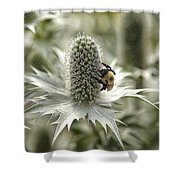 Green Thistle Shower Curtain